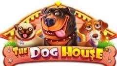 dog house pragmatic slot